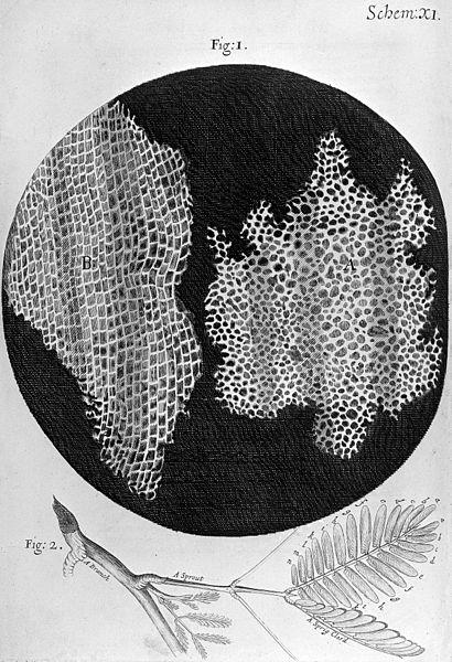 410px-robert_hooke2c_micrographia2c_cork-_wellcome_m0010579